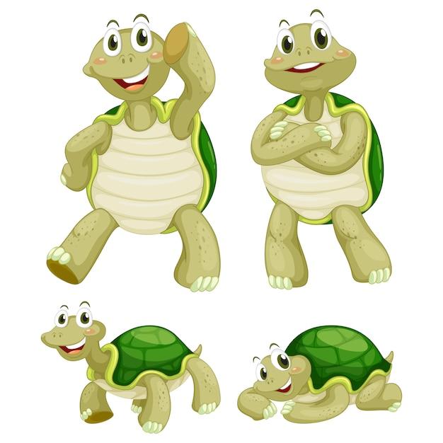 Gekleurde schildpadden collectie Gratis Vector