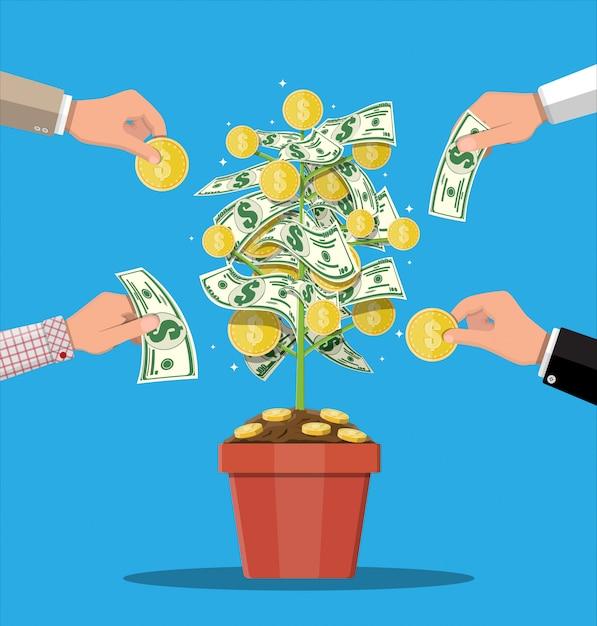 Geld muntboom. groeiende geldboom. Premium Vector