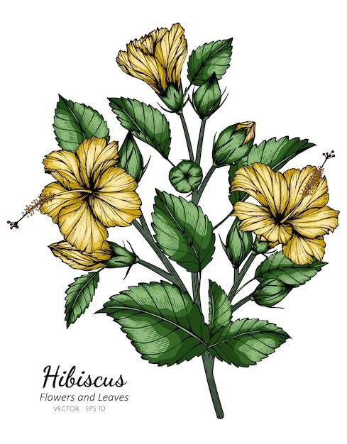 Gele hibiscusbloem en bladtekeningillustratie met lijnkunst op witte achtergronden. Premium Vector