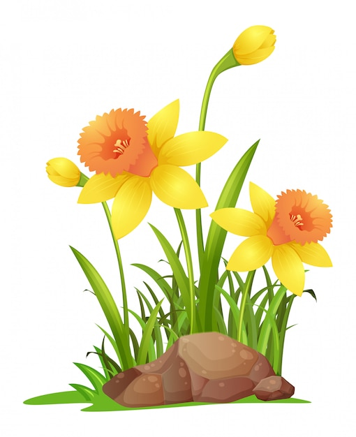 Gele narcisbloemen in tuin Gratis Vector