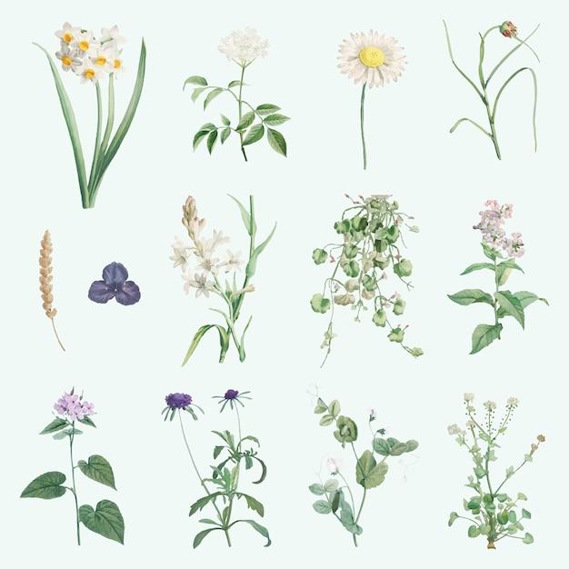 Gemengde zomerbloemen Gratis Vector