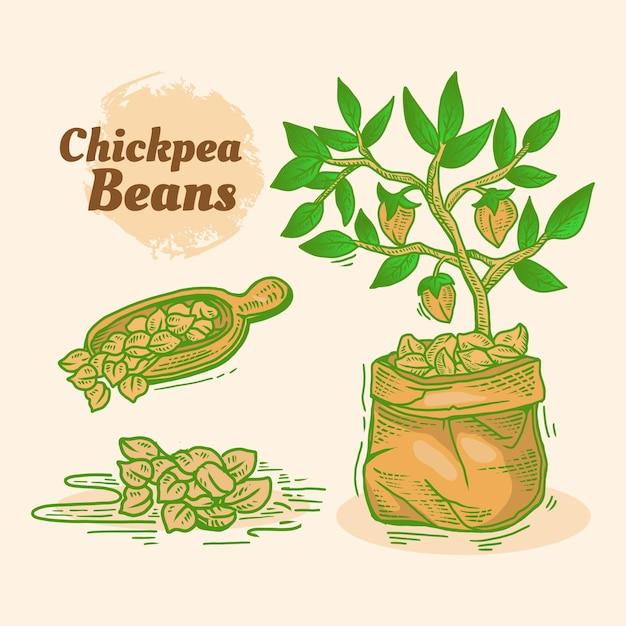 Getekende kikkererwtenbonen en plant Gratis Vector