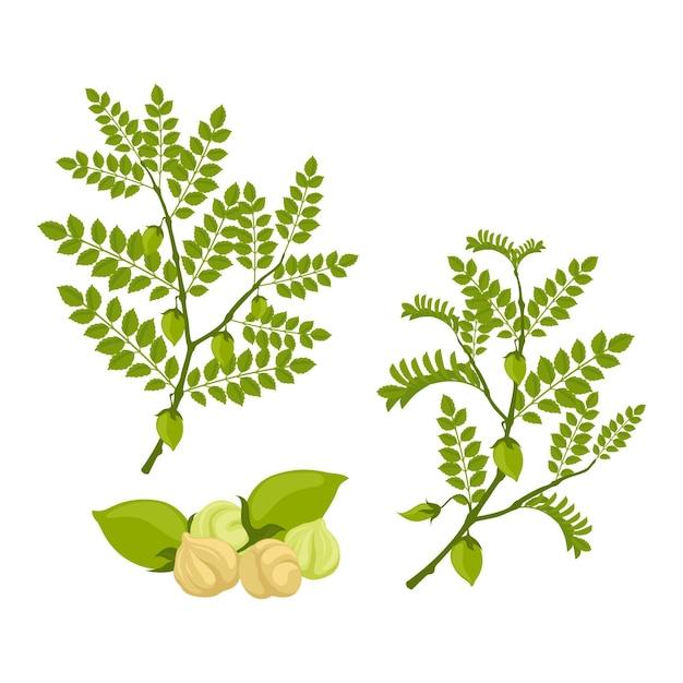 Getekende kikkererwtenbonen met plant Gratis Vector
