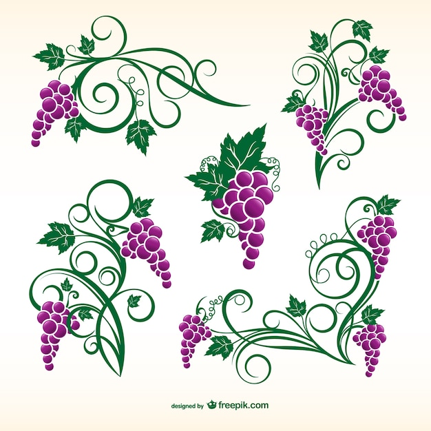 Grapevine ornamenten Premium Vector