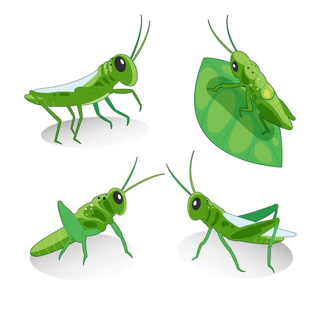 Grasshoppers illustratie collectie Gratis Vector