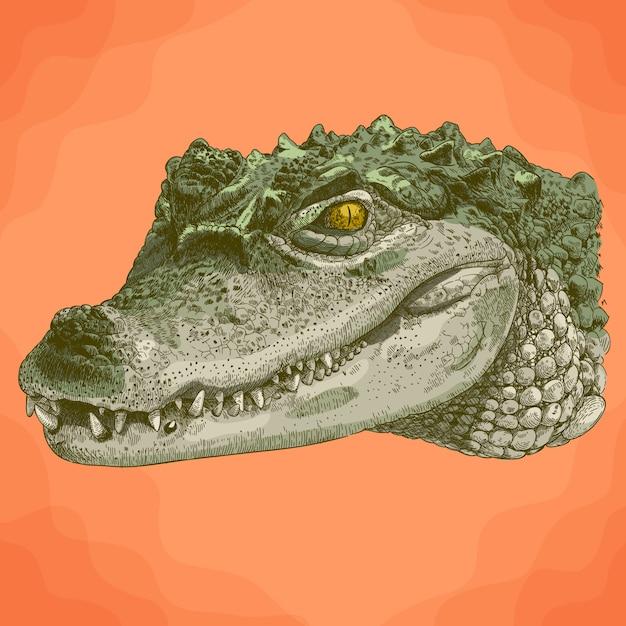 Gravure illustratie van krokodil hoofd Premium Vector