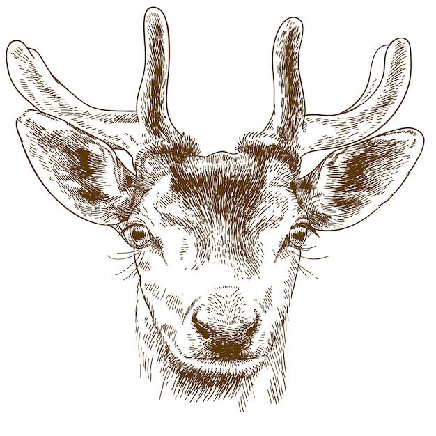 Gravure illustratie van rendieren hoofd Premium Vector