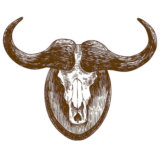 Gravure tekening illustratie van buffel schedel Premium Vector