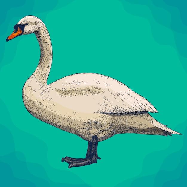 Gravure van illustratie van zwaan in retro stijl Premium Vector