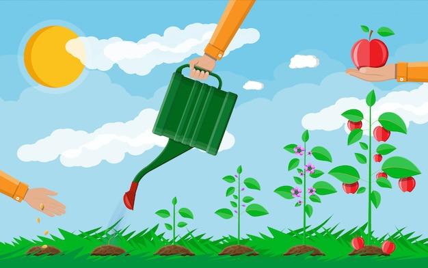 Groei van plant, van spruit tot fruit. Premium Vector