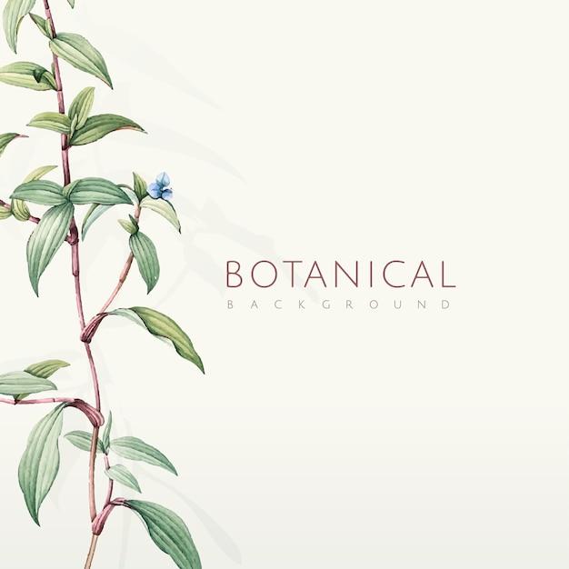 Groen botanisch bladerenontwerp als achtergrond Gratis Vector