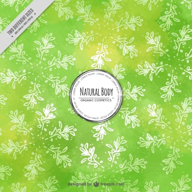 Groene achtergrond met olijfbladeren Gratis Vector