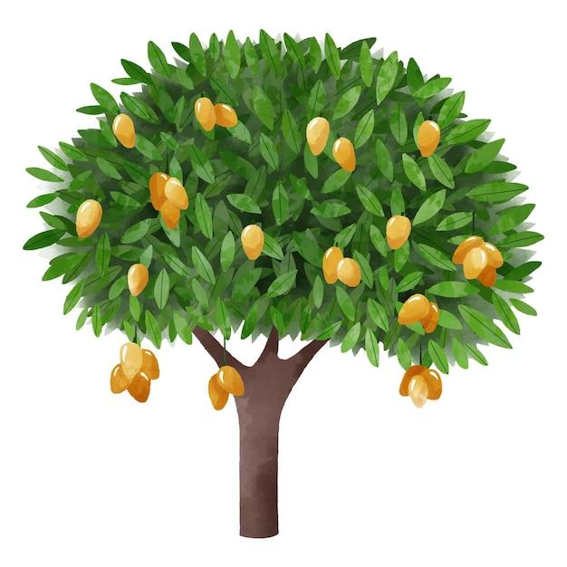 Groene aquarel mangoboom met fruit Gratis Vector