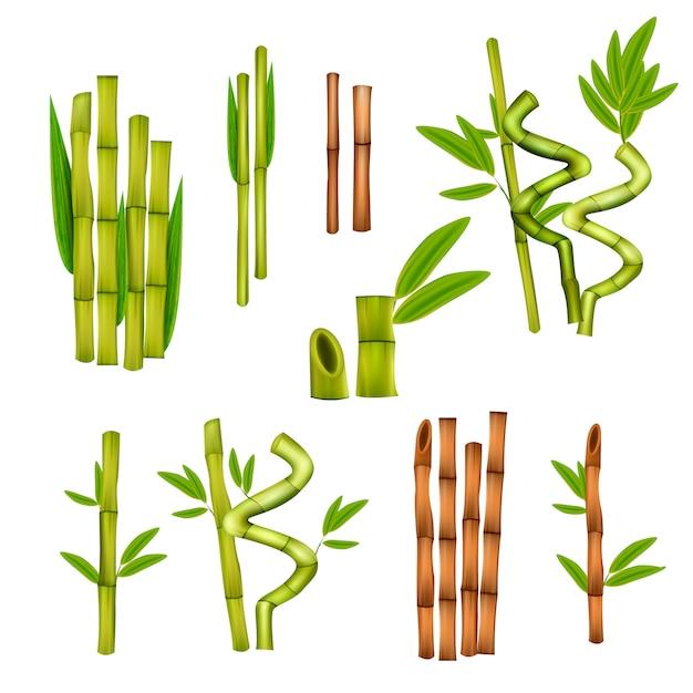 Groene bamboe decoratieve elementen Gratis Vector
