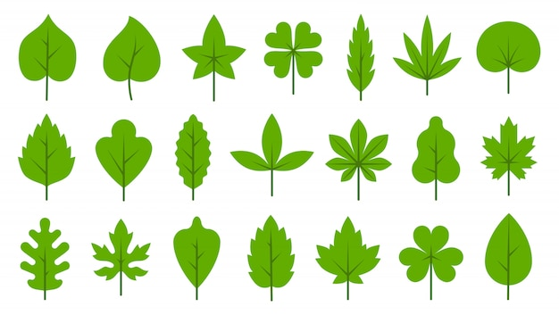 Groene bladeren platte icon set. bio organic eco eenvoudig bladsymbool Premium Vector