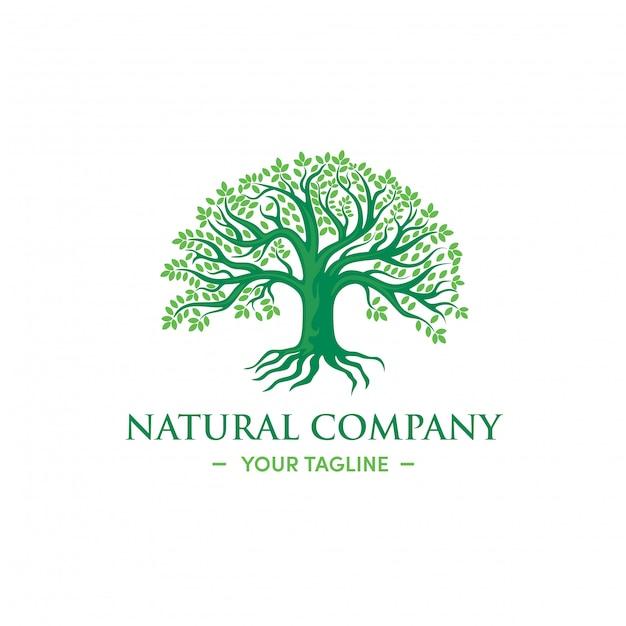 Groene boom logo ontwerp natuurlijke kruiden premium vector Premium Vector
