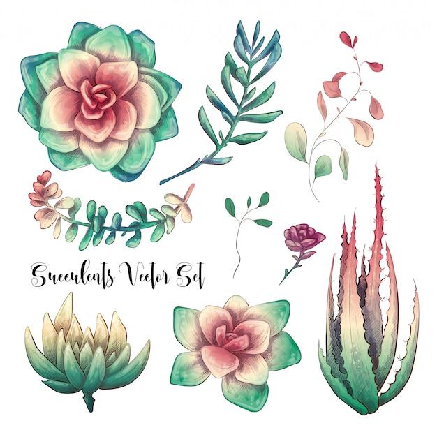 Groene kleurrijke succulente boeketten vectorontwerpvoorwerpen. Premium Vector