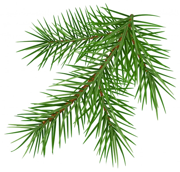 Groene pluizige nette kerstmis van het tak bijkomende symbool Premium Vector