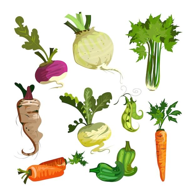Groenten uit tuinset Gratis Vector