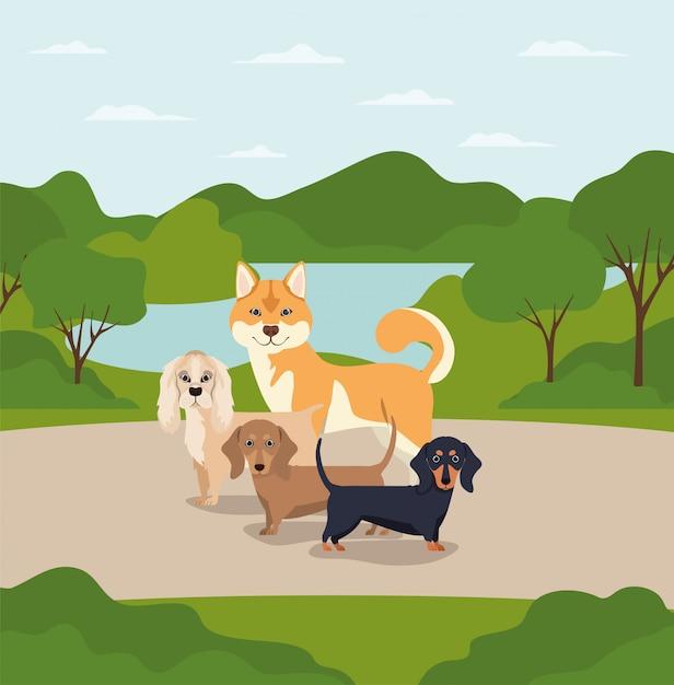 Groep honden huisdieren in de kamp karakters Premium Vector