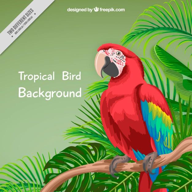 Hand geschilderde papegaai en palmbladeren achtergrond Gratis Vector