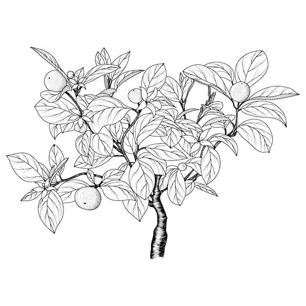 Hand getekend beeld van een oranje boom. Premium Vector