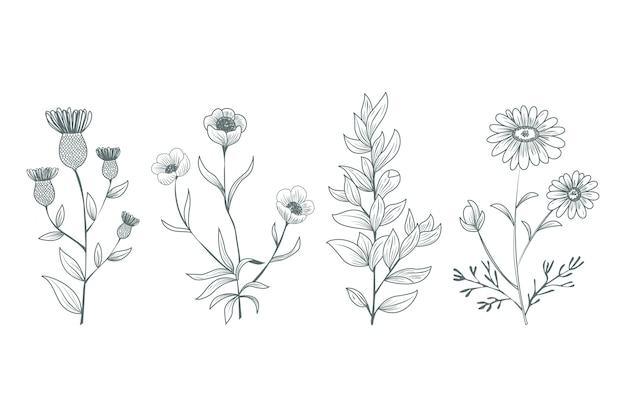 Hand getekend botanische kruiden Gratis Vector