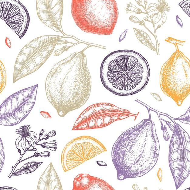 Hand getekend citrusvruchten patroon. Premium Vector