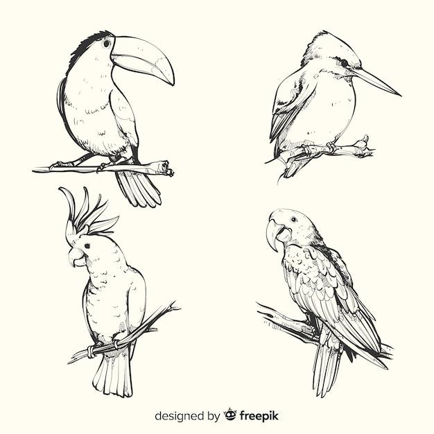 Hand getekend exotische vogel collectie Gratis Vector