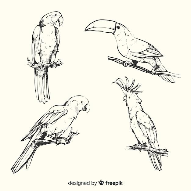 Hand getekend exotische vogel collectie Premium Vector