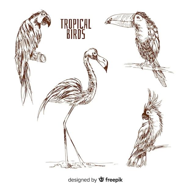 Hand getekend exotische vogels collectie Gratis Vector