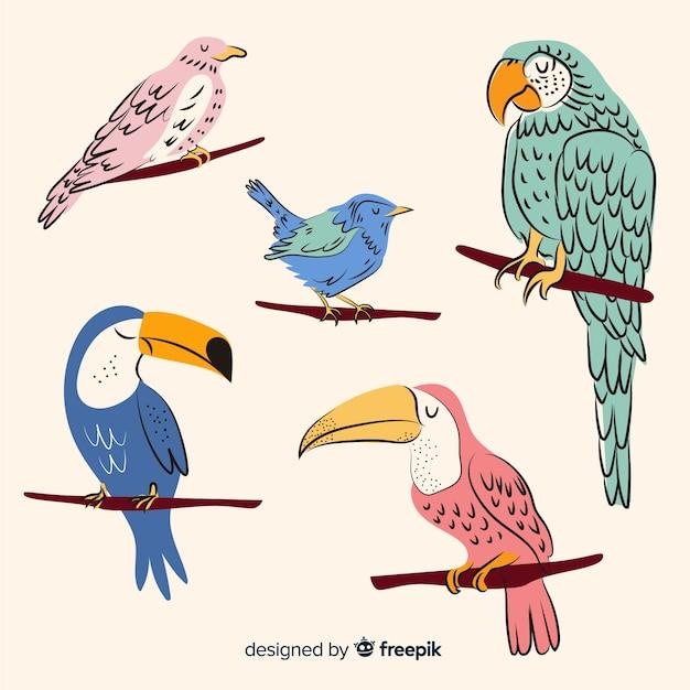 Hand getekend exotische vogels collectie Premium Vector