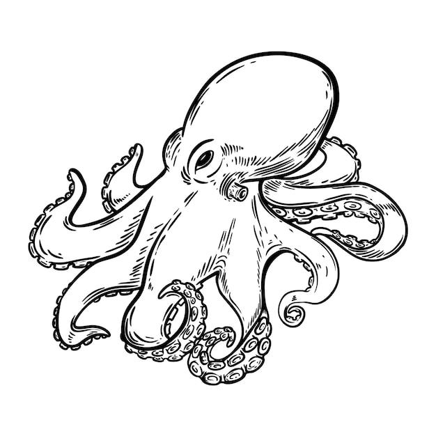hand getekend octopus illustratie op witte achtergrond