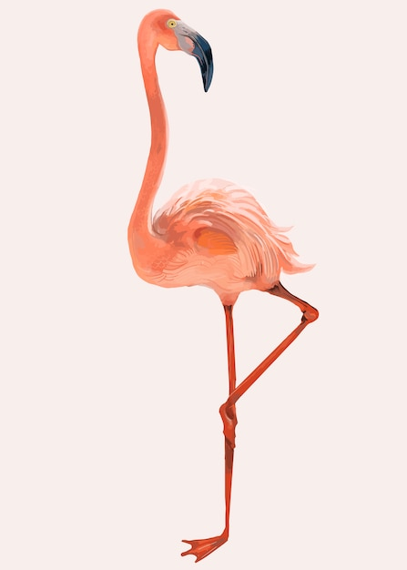 Hand getekend roze flamingo Gratis Vector