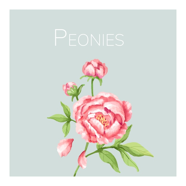 Hand getekend roze pioenroos bloem illustratie Premium Vector