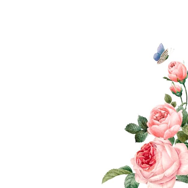 Hand getekend roze rozen frame op witte achtergrond Gratis Vector