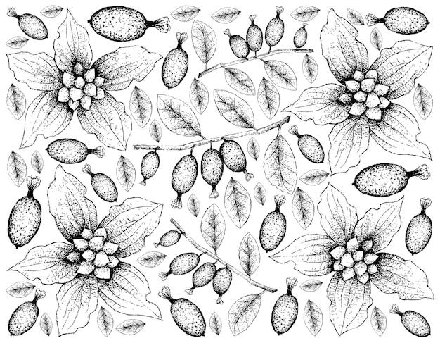 Hand getekend van dwerg kornoelje en elaeagnus latifolia vruchten achtergrond Premium Vector