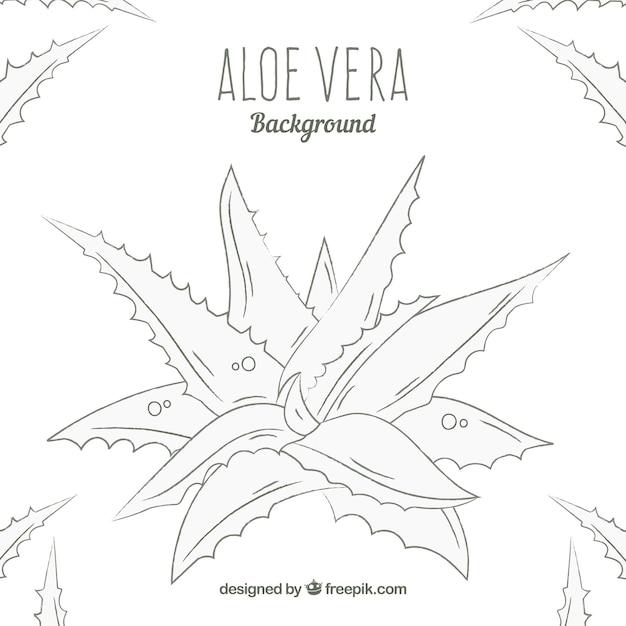 Hand Getekende Aloe Vera Achtergrond Vector Gratis Download