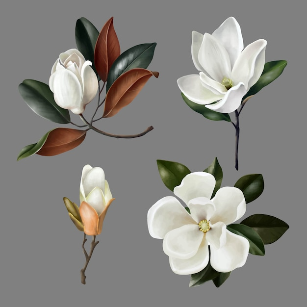 Hand getekende illustraties van schattige realistische magnolia's bloemen en knoppen Premium Vector