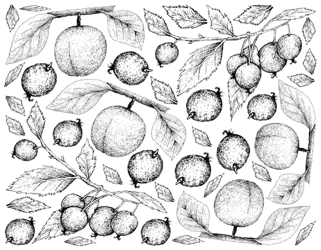 Hand getrokken achtergrond van abrikoos en europese brandnetelboom fruit Premium Vector