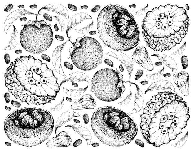 Hand getrokken achtergrond van australische zwarte sapote en pindaiva-vruchten Premium Vector