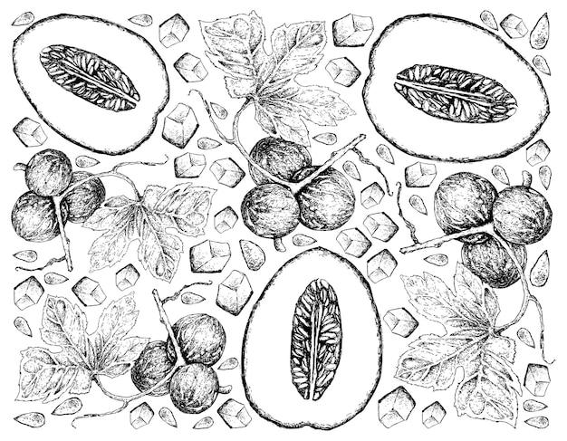 Hand getrokken achtergrond van honingdauw meloen en diplocyclos palmatus vruchten Premium Vector