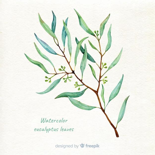 Hand getrokken eucalyptus tak achtergrond Gratis Vector