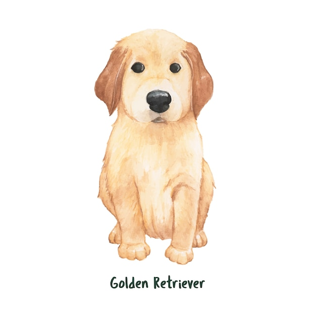 Hand getrokken golden retrieverhond Gratis Vector