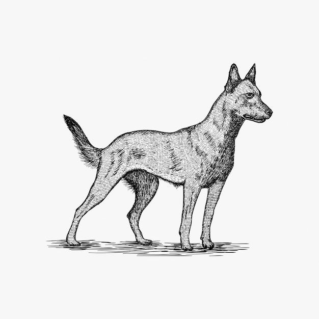 Hand getrokken hond logo ontwerp illustratie Premium Vector