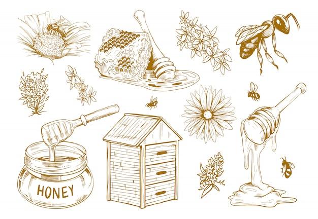 Hand getrokken honing platte schets set Gratis Vector