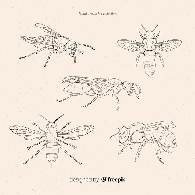 Hand getrokken insecten schetsen collectie Gratis Vector