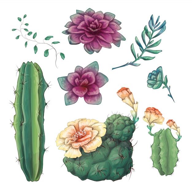 Hand getrokken kleurrijke cactussen en succulente set. Premium Vector