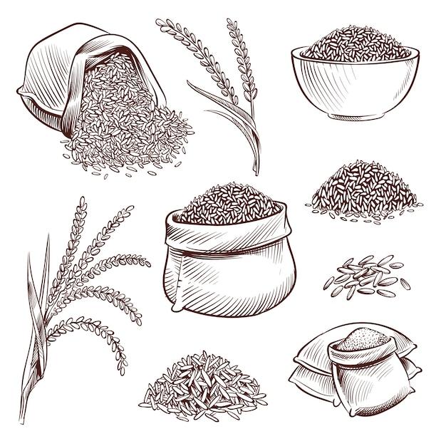 Hand getrokken rijst. doodle zak en. schets rijst oren vector set illustratie Premium Vector