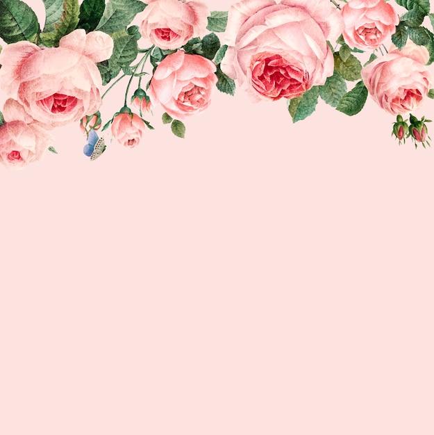 Hand getrokken roze rozenkader op pastelkleur roze vector als achtergrond Gratis Vector
